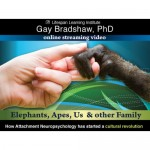 Elephants, Apes, Us and Other Family: How Attachment Neuropsychology has Started a Cultural Revolution -   Video